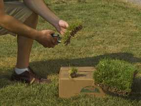 Planting Zoysia