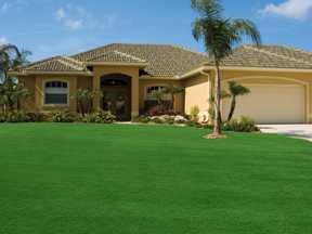 lush lawn in front of house with palm tree