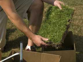man unpacking and displaying a piece of sod with 150 plugs